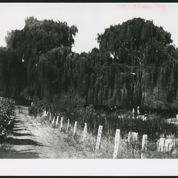 Willows at Springfield