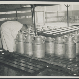 Milk grading at SA Farmers' Co-Op Union Ltd. Dairy Produce Department