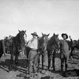 Horses of the Australian Light Horse.
