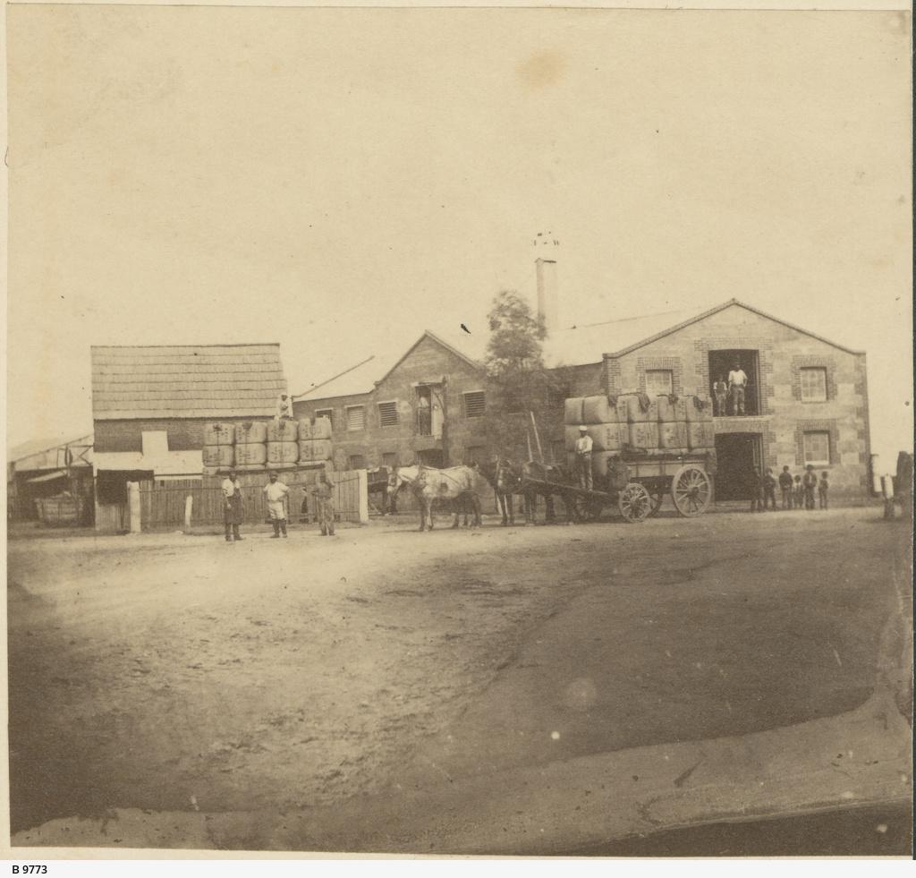 Wool Plant, Hindmarsh
