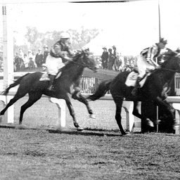 Horses and jockeys at a South Australian race meeting