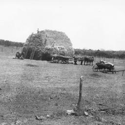 Building a haystack