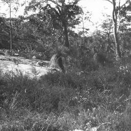 Bush scene