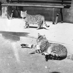 Two cats sitting in the sun