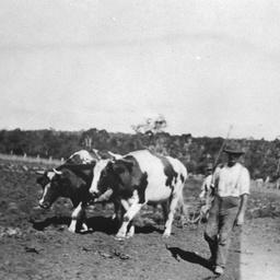 Frank Hailstone ploughing on his Dingabledinga property