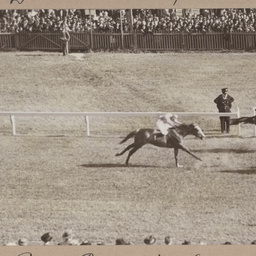 Royal Park Quality Stakes
