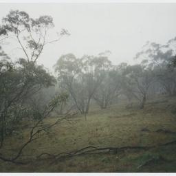 Bush land in Tothill Rangers