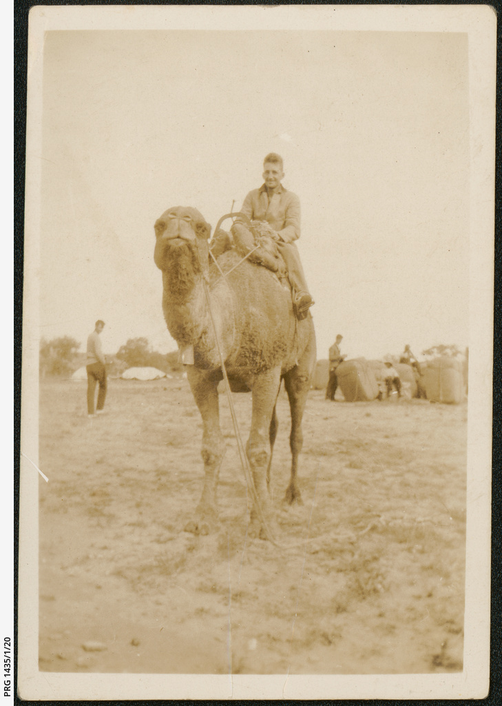 Arrabury racing camel