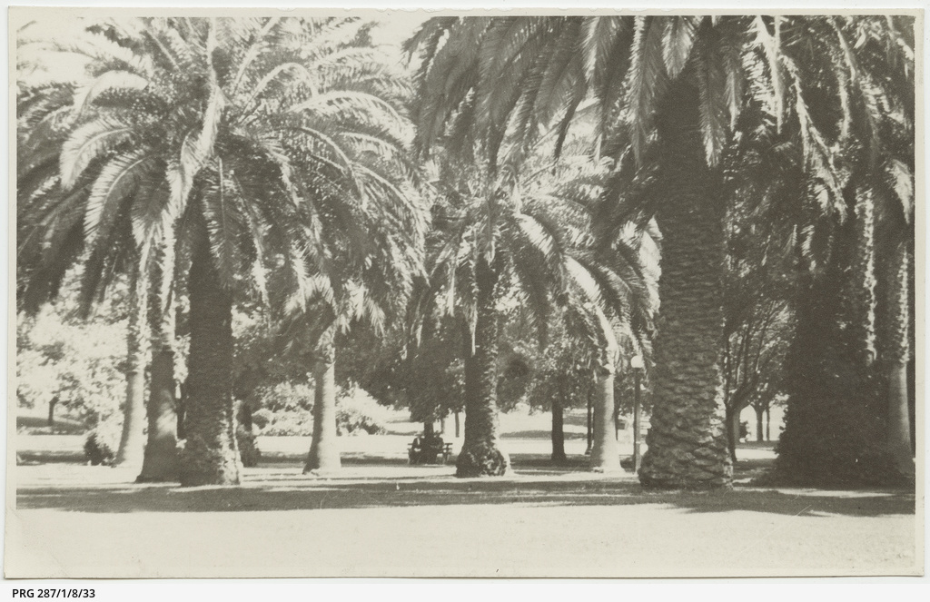 Palm dates in Melbourne