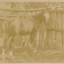 Lucy's foal
