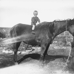 Child on a horse horse