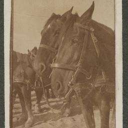 World War One Light Horse album