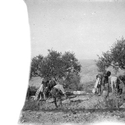 Troops and horses.