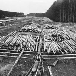 Logs on skids Mount Burr