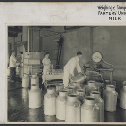 Weighing and sampling Farmers' Union Milk