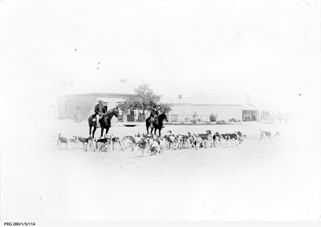 Two horsemen taking a pack of hounds out for exercise