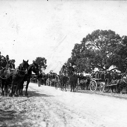 Horse drawn vehicles waiting on a roadside in South Australia