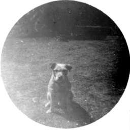 Arthur Searcy's Irish terrier dog Pal