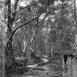 Willochra Creek at Melrose