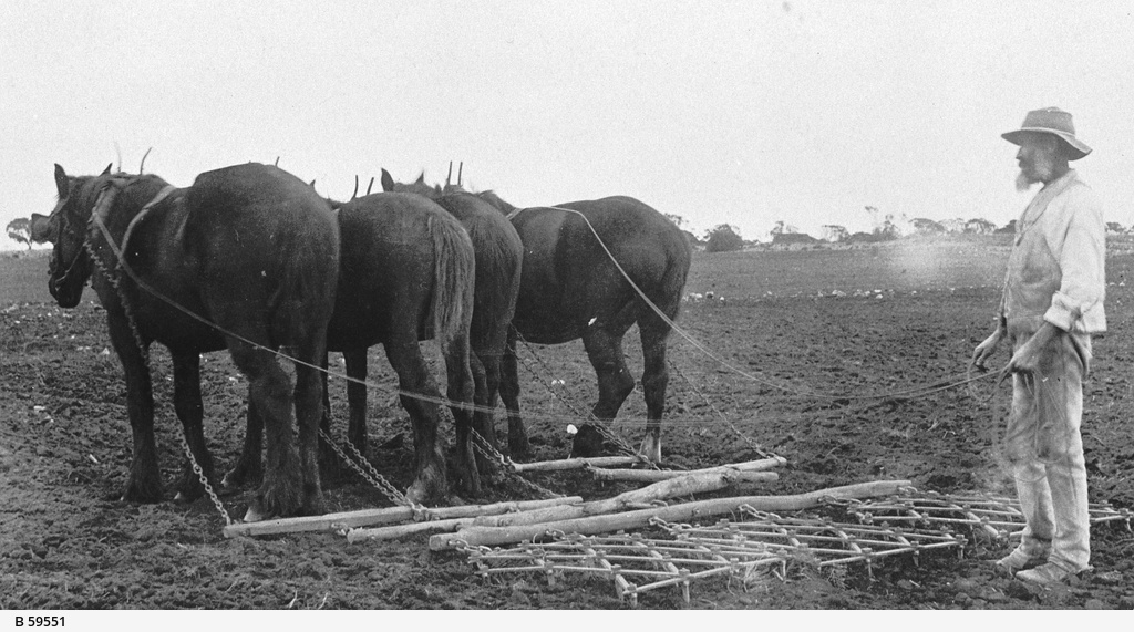 Team of horses working the soil