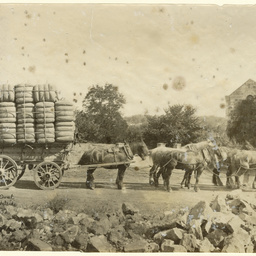 Wagon of wool, 1000 pounds worth