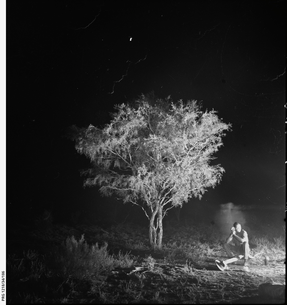 Ironwood tree illuminated by campfire