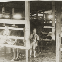 Milking plant in operation