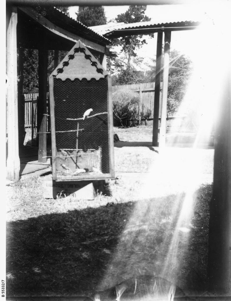 Aviary in backyard