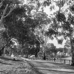 Mt. Barker Road