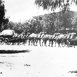 Camel team passing through Wilcannia