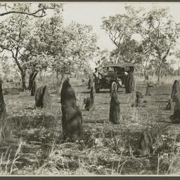 Termite mounds.