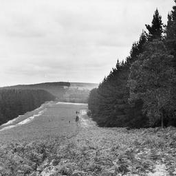Mount Burr Forest