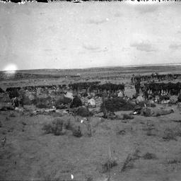 Horses at camp.