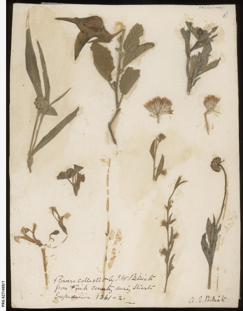 Botanical specimens