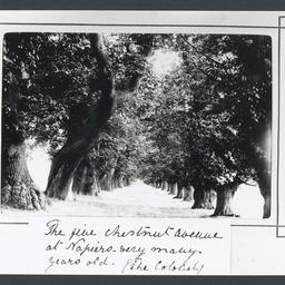 Avenue of trees at Llanvihangel Court, Wales