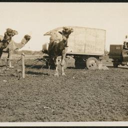 Hawkers at Coondambo