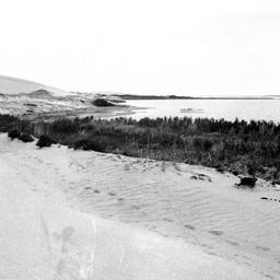 Sand dunes on Younghusband Peninsula