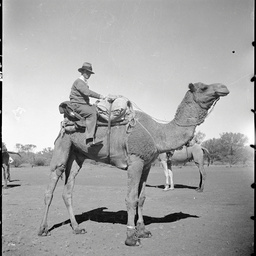 V.J. White on a camel