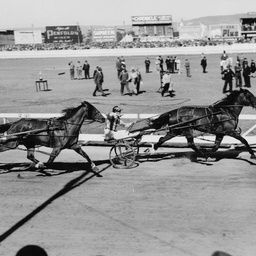 The finish of the final SA Trotting Cup