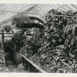 Newman's Nursery, Houghton
