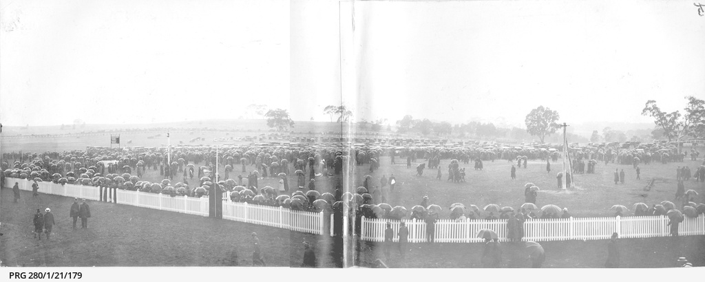 A wet day at the races in South Australia