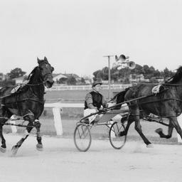 Racing in the Honeyman Handicap