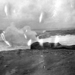 Rookery on Neptune Island