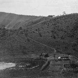 Mount Gambier and District : Forest Reserve