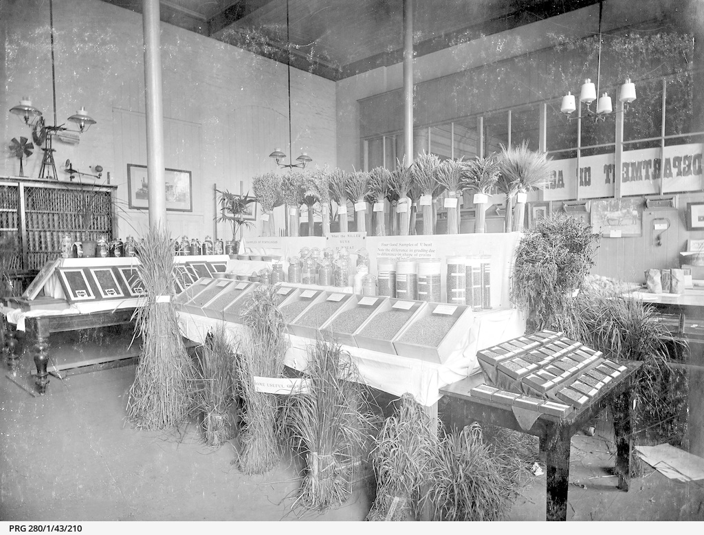 Display of wheat by the Department of Agriculture