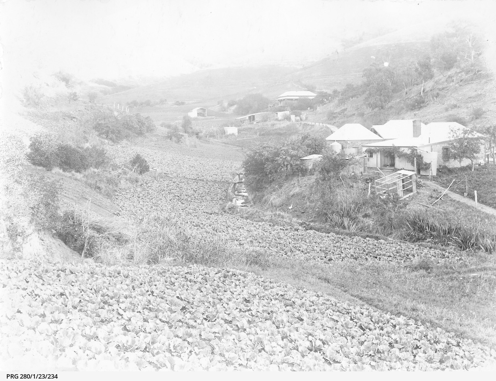 Vegetable farming at Broken Hill Creek, New South Wales
