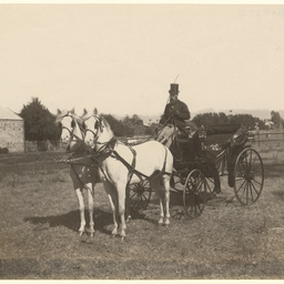 Carriage and pair of white horses