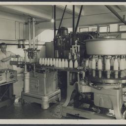 Bottling milk at SA Farmers' Co-Op Union Ltd., Mile End