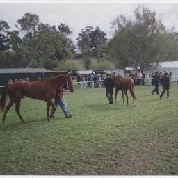 The Oakbank Race