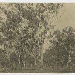 Royal Australasian Ornithologists' Union River Excursion